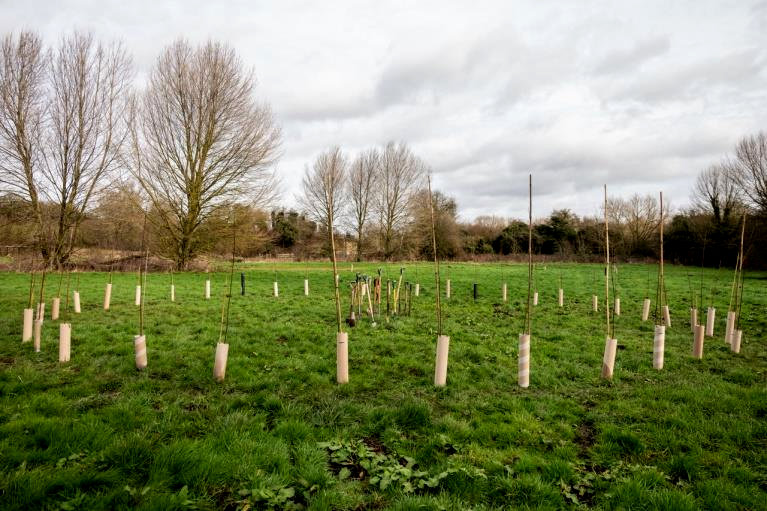new circle of willow trees